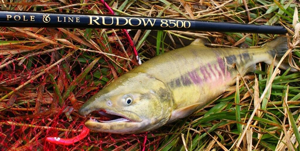 salmon on fixed line rod