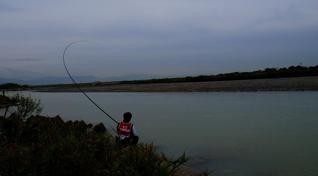 fish playing