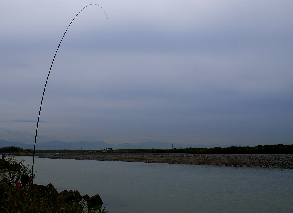 landing of salmon