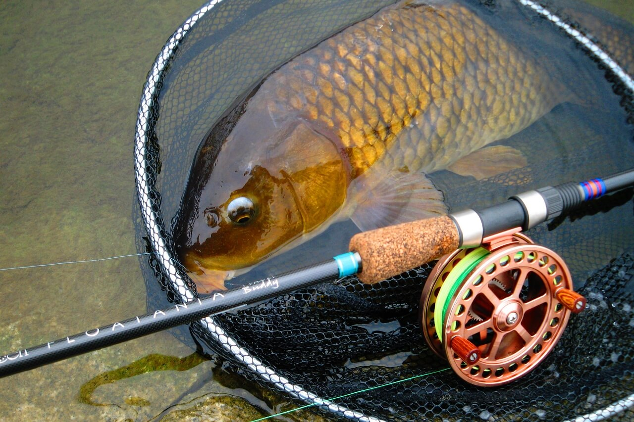 common carp on FLOATANIA 14ft 5pc float rod
