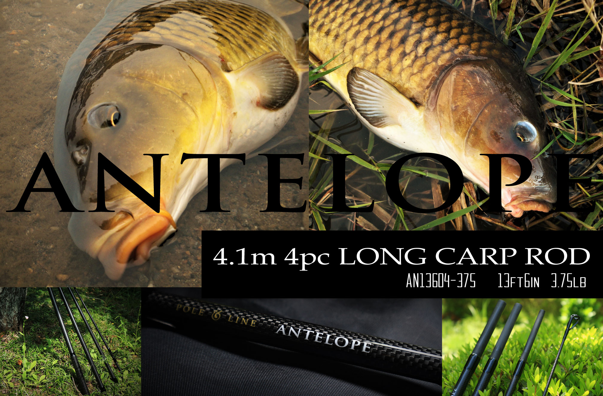 antelope 4.1m 3.75lb 4pc carp rod